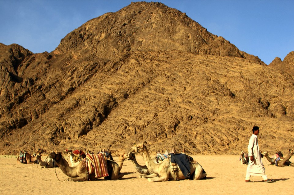 Camel stop in the Sharm el Sheik desert in Asian Egypt on Mallory on Travel, adventure, photography