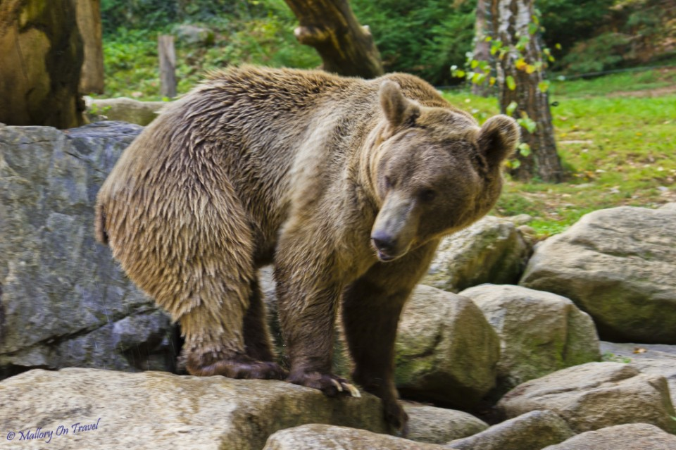 The bear compound at the Parc des Animalier Pyrenees, Argelès-Gazost in France on Mallory on Travel, adventure, adventure travel, photography