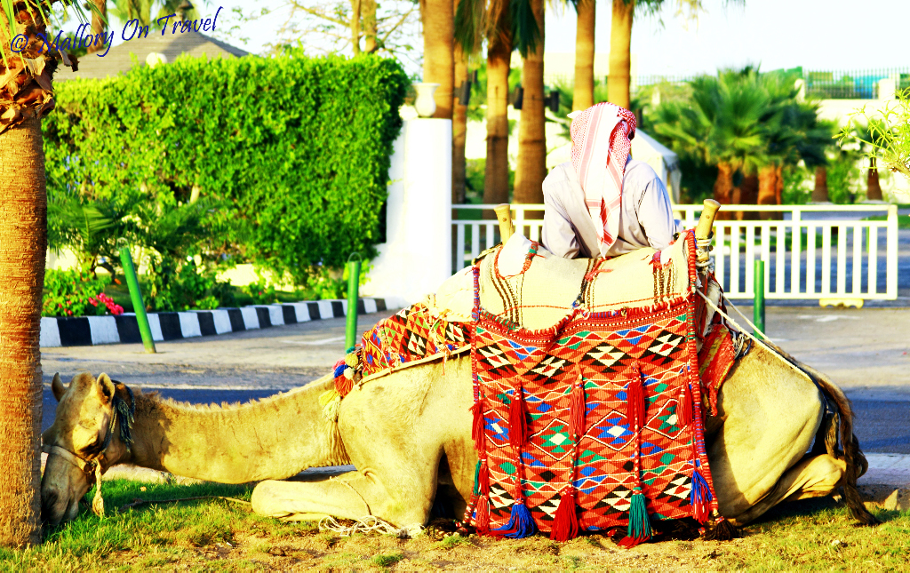 Chilling with the camel near Sharm el Sheik  on Mallory on Travel, adventure, adventure travel, photography