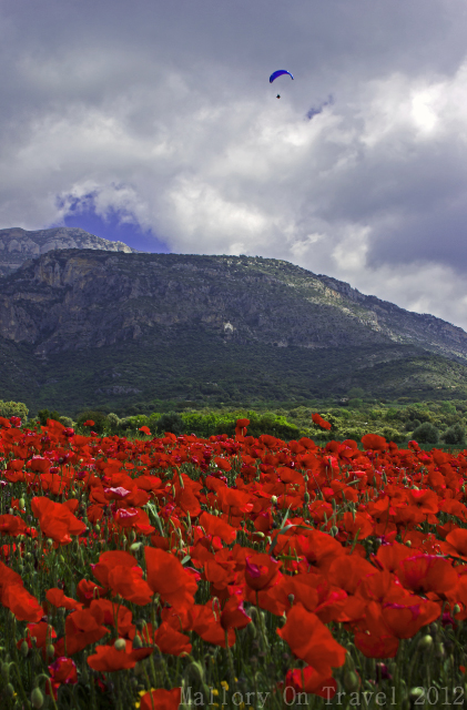 Parapenting over colour, poppy fields of in Catalonia, Spain on Mallory on Travel, adventure, adventure travel, photography Iain Mallory-300-38 parapenting_spain