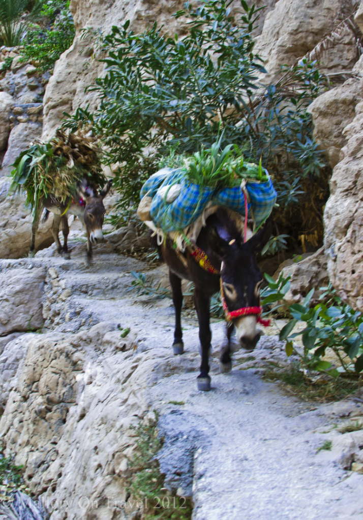 Mules carrying palm fronds in Wadi Shab, Oman on Mallory on Travel adventure photography