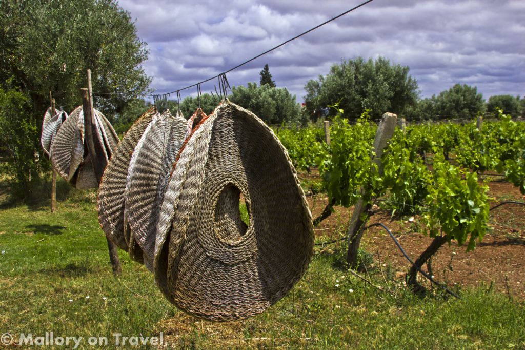 Washing vineyard style in Essaouira, Morocco on Mallory on Travel adventure photography