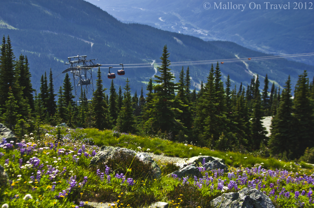 Wild alpine flowers high above Whistler in British Columbia, Canada on Mallory on Travel adventure photography