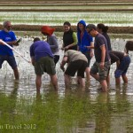 Postcard from Catalonia; Fun in the Delta l' Ebre rice paddies