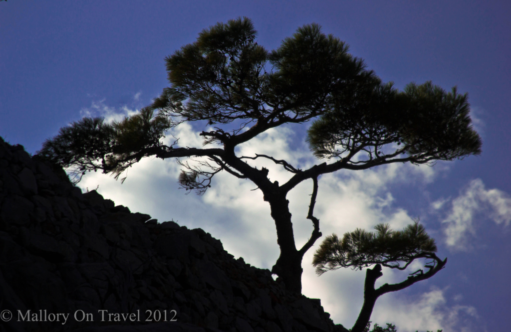 Tree on the skyline of the island of Spinalonga off Crete in Greece on Mallory on Travel adventure photography