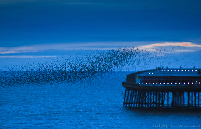 Flocking birds over North Pier on the Fylde Coast near Blackpool on Mallory on Travel, adventure, photography Iain Mallory-300-6_starling_murmur