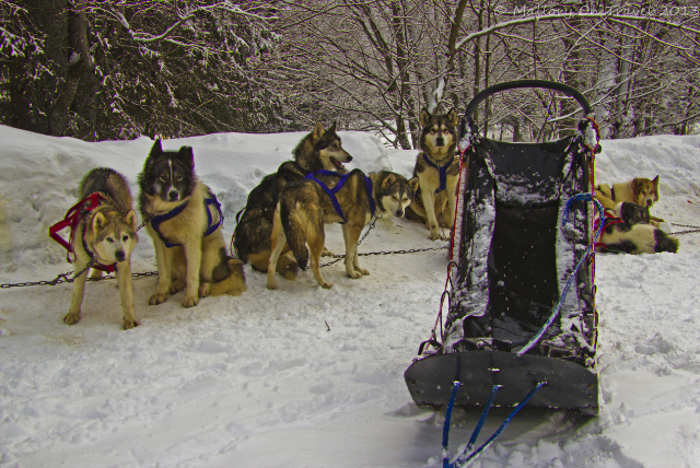 Sled dogs, huskies in the Rhone-Alpes mountain town of Chamonix Mont Blanc in France on Mallory on Travel, adventure, adventure travel, photography Iain Mallory-300-46 husky_team