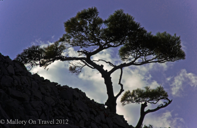 A small tree silhouetted on the sialnd of Spinalonga, Crete in Greece on Mallory on Travel, adventure, adventure travel, photography Iain Mallory-300-21 spingalonga_crete