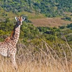 Experiencing a Little of the Big Five in South Africa