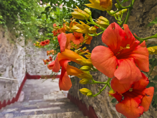 Flowers and byzantine monateries at Mystras on the Peloponnese Peninisula, Greece on Mallory on Travel adventure, adventure travel, photography Iain Mallory-300-2-1_flowers