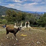 Greek Travels, Roadtripping In The Peloponnese