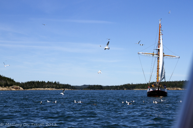 Sailing boat whale watching in St Andrews, the Bay of Fundy, New Brunswick in Canada on Mallory on Travel adventure, adventure travel, photography Iain Mallory-300-8_whale_watching