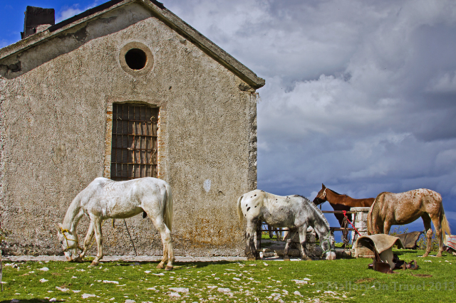 Horse riding in the Matese or Molise, Italy on Mallory on Travel adventure, adventure travel, photography Iain Mallory-300-99_horses