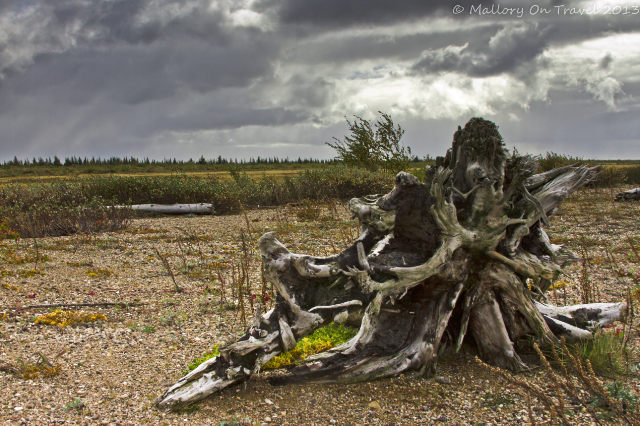 Dead tree trunk in Manitoba, Canada on Mallory on Travel adventure, adventure travel, photography Iain Mallory-300-104_manitoba_landscape