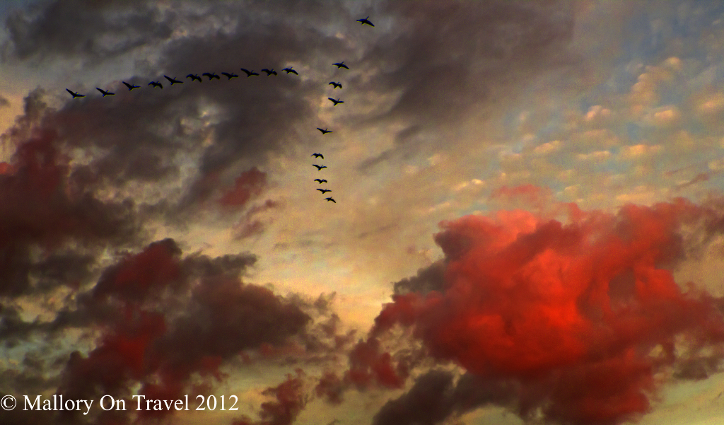 Geese heading home for winter in the sunset sky over Manchester, in northern England at the autumn Equinox on Mallory on Travel adventure photography