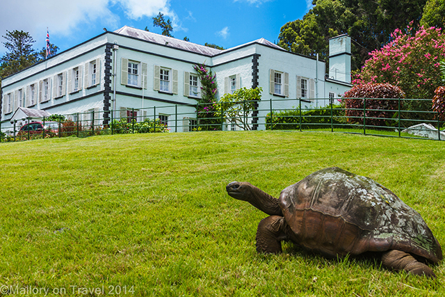 Plantation House, home to the Governor, and giant tortoises on St Helena, in the South Atlantic on Mallory on Travel adventure, adventure travel, photography Iain Mallory-300 plantation_house