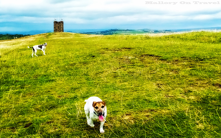 The cage at Lyme Park at Disley, Cheshire in the Peak District on Mallory on Travel adventure, adventure travel, photography Iain_Mallory_Lyme1401756.jpg lyme_park