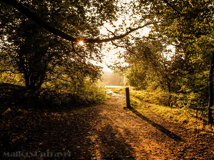 Autumn sunset in Brabyn Park near the River Goyt in Marple, Cheshire in England on Mallory on Travel adventure, adventure travel, photography Iain_Mallory_Goyt1403109.jpg brabyn_park