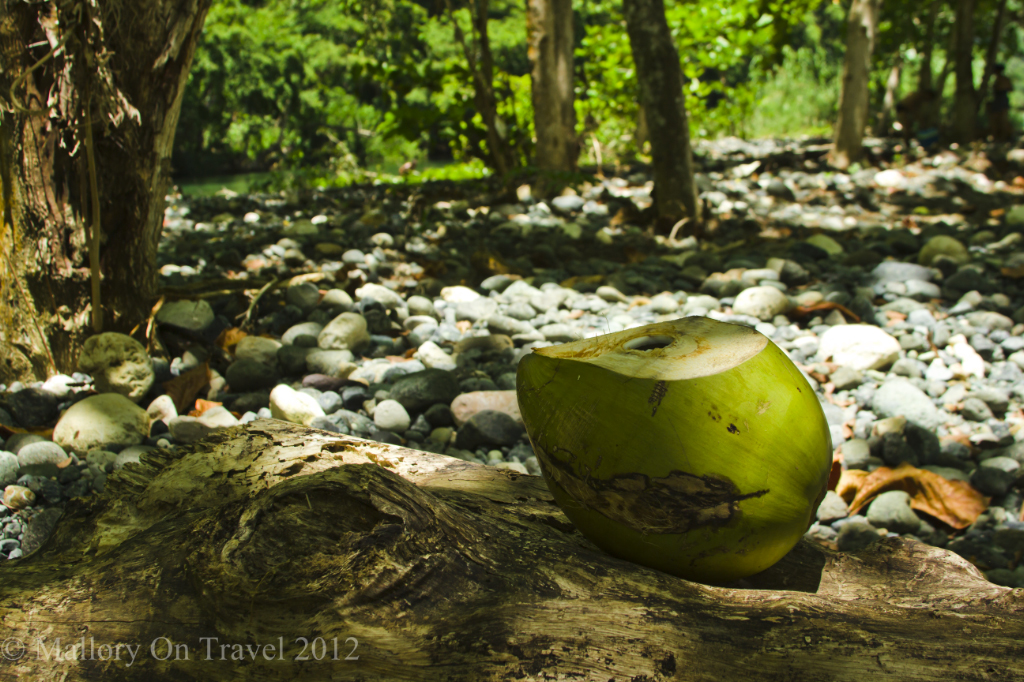 Budget travel; Fresh coconut for sale in the river swamps near Baracoa on the Caribbean island of Cuba  on Mallory on Travel adventure, adventure travel, photography Iain Mallory-300-84 fresh_coconut