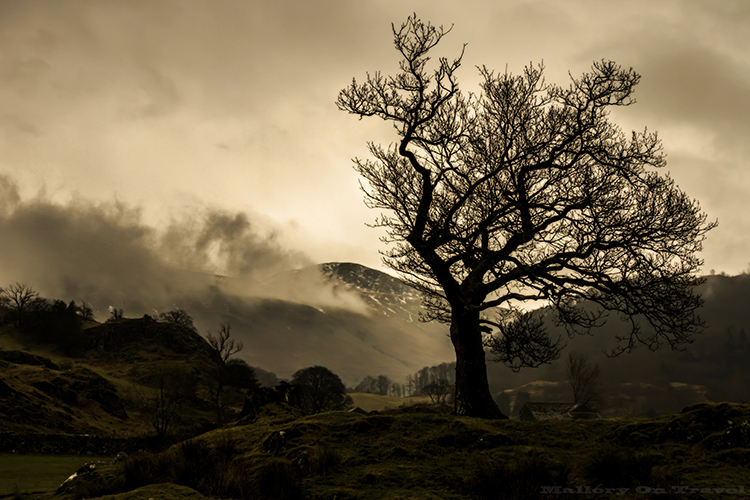 Lone tree near Thirlmere in the English Lake District, Cumbria, United Kingdomon Mallory on Travel adventure, adventure travel, photography Iain_Mallory_Lakes1407998 thirlmere