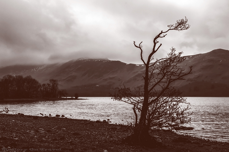 Lone tree on the shores of Derwentwater in Borrowdale Valley in the English Lake District, near keswick, Cumbria on Mallory on Travel adventure, adventure travel, photography Iain_Mallory_Lakes1408085 derwentwater