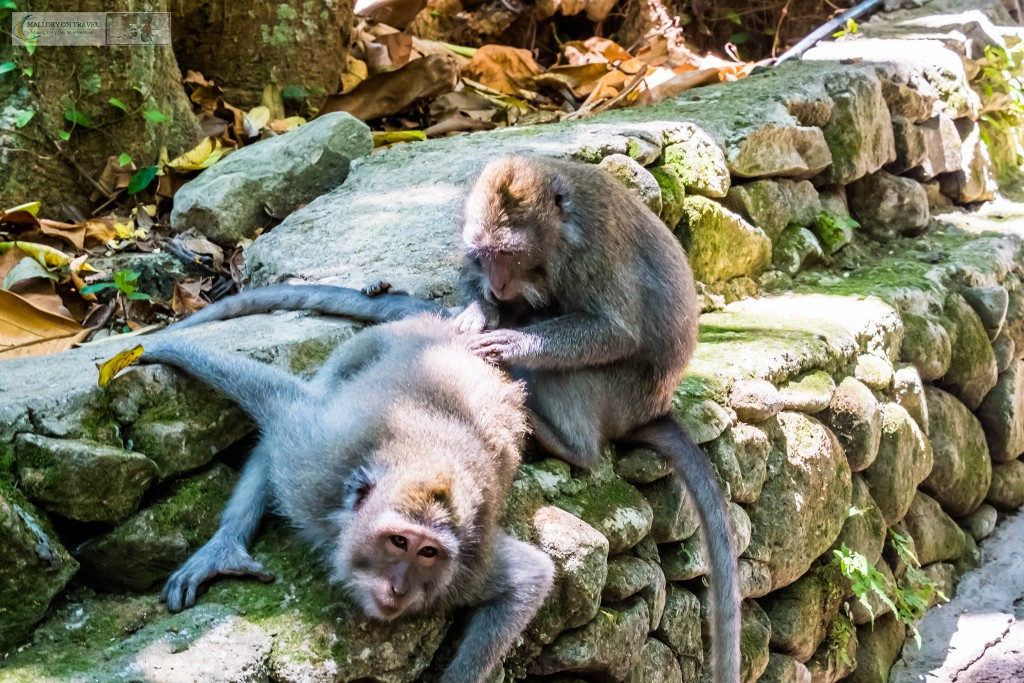 Balinese long-tailed monkeys at the Sacred Monkey Forest Sanctuary in Ubud, Bali in the Republic of Indonesia on Mallory on Travel adventure travel, photography, travel Iain Mallory_monkey9324