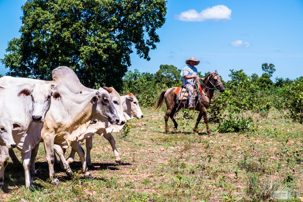 Cowboys rounding up cattle in the wetlands of the Pantanal on the Araras ecolodge in the Mato Grosso region of Brazil on Mallory on Travel adventure travel, photography, travel Iain_Mallory_Patanal-3623