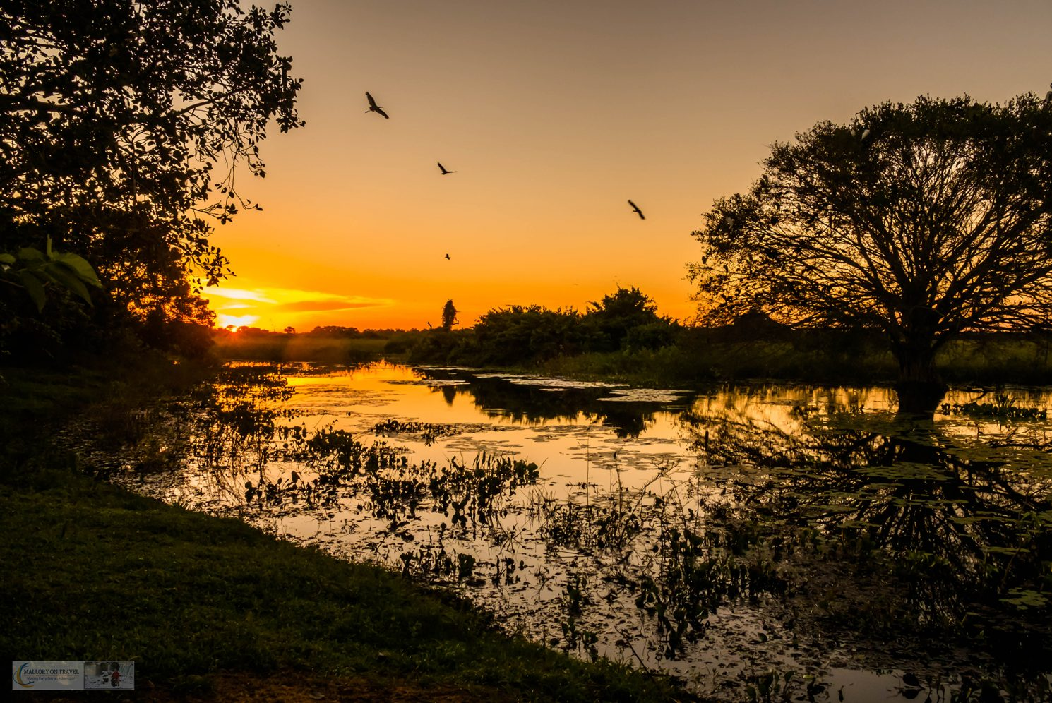 Sunset in the Pantanal at the roosting tree at Araras ecolodge in the Mato Grosso region of Brazil on Mallory on Travel adventure travel, photography, travel Iain_Mallory_Patanal-3827