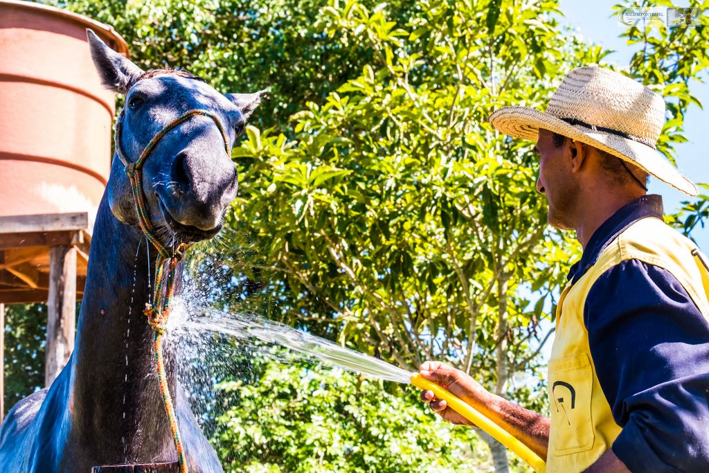 A cowboy cleaning a horse in the wetlands of the Pantanal on the Araras ecolodge in the Mato Grosso region of Brazil on Mallory on Travel adventure travel, photography, travel Iain_Mallory_Patanal-4269