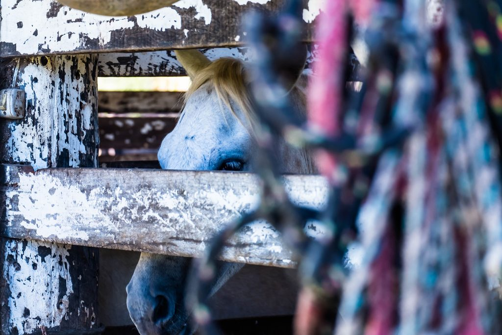 Cowboy stables at the Araras ecolodge in the wetlands of the Pantanal, Mato Grosso region of Brazil on Mallory on Travel adventure travel, photography, travel Iain_Mallory_Patanal-4347
