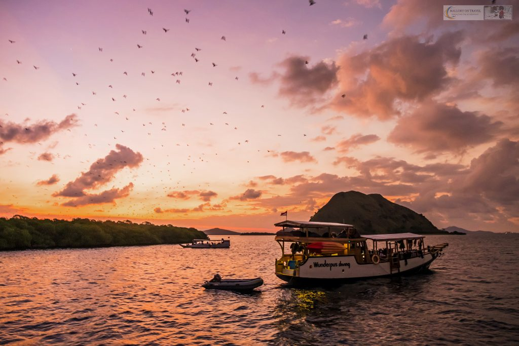 Fruits bats leaving their roost in Komodo Island National Park, an archipelago in the Republic of Indonesia on Mallory on Travel adventure travel, photography, travel iain-mallory_indo-001-54