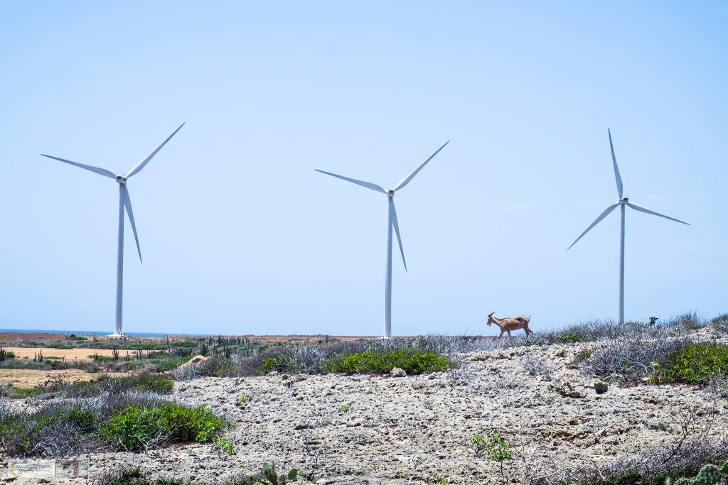Wanderlust on the Caribbean island of Aruba, goats and windfarms on Mallory on Travel adventure travel, photography, travel iain-mallory_aruba-5-69