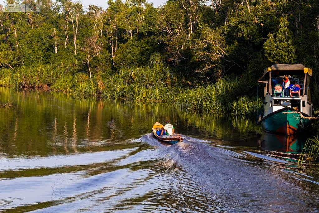 Photographing wildlife; Klotok cruising on the Sekonyer River in Tanjung Puting National Park, Kalimantan on the island of Borneo in the Republic of Indonesia on Mallory on Travel adventure travel, photography, travel iain-mallory_indo-1-16