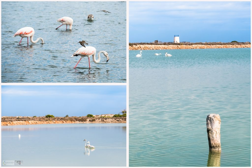A montage of flamingos from the saltflats of San Pedro del Pinatar in Murcia on the Costa Cálida, Spain on Mallory on Travel adventure travel, photography, travel iain-mallory_montage-1