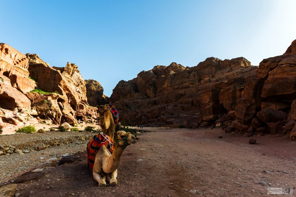 Camels on the Roman Highway in Petra, the red-rose city of south Jordan on Mallory on Travel adventure travel, photography, travel Iain Mallory_Jordan 001-21