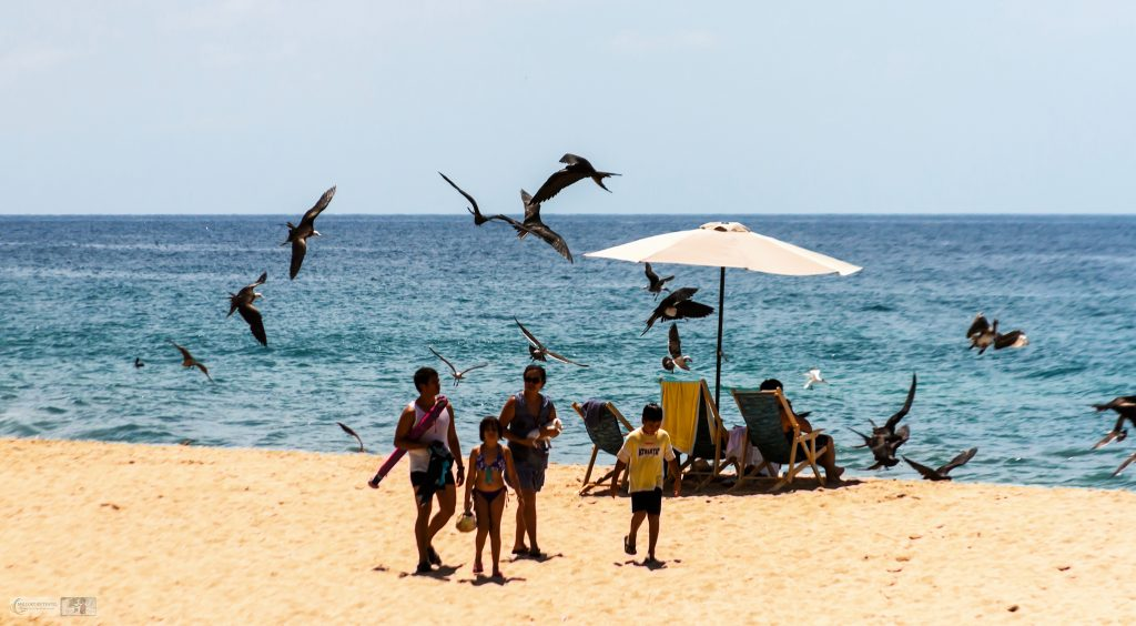 A small flock of magnificent frigate birds on the beach at San Pancho, the Mexican San Francisco on the Pacific coast of Riviera Nayarit on Mallory on Travel adventure travel, photography, travel Iain Mallory_Mex 001-49