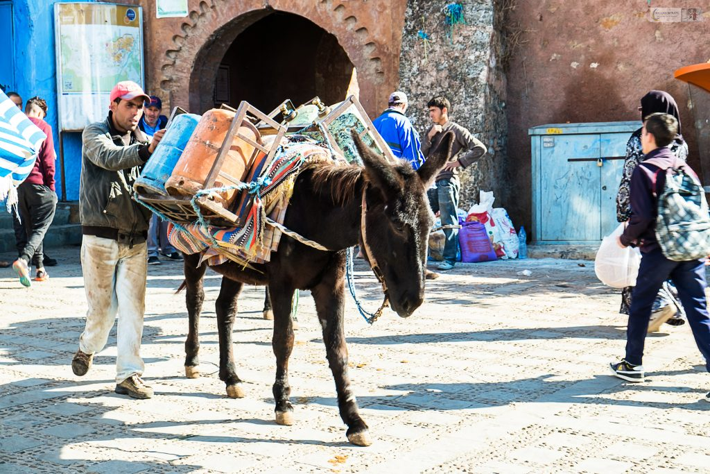 Donkey trader in the souks and streets of Chefchaouen in the Rif Mountains in the north African country of Morocco on Mallory on Travel adventure travel, photography, travel Iain Mallory_Morocco 016