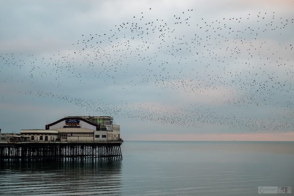 A North pier murmuration of roosting starlings over the Irish sea resort of Blackpool on the Fylde Coast of Lancashire on Mallory on Travel adventure travel, photography, travel Iain Mallory_Murmuration 005