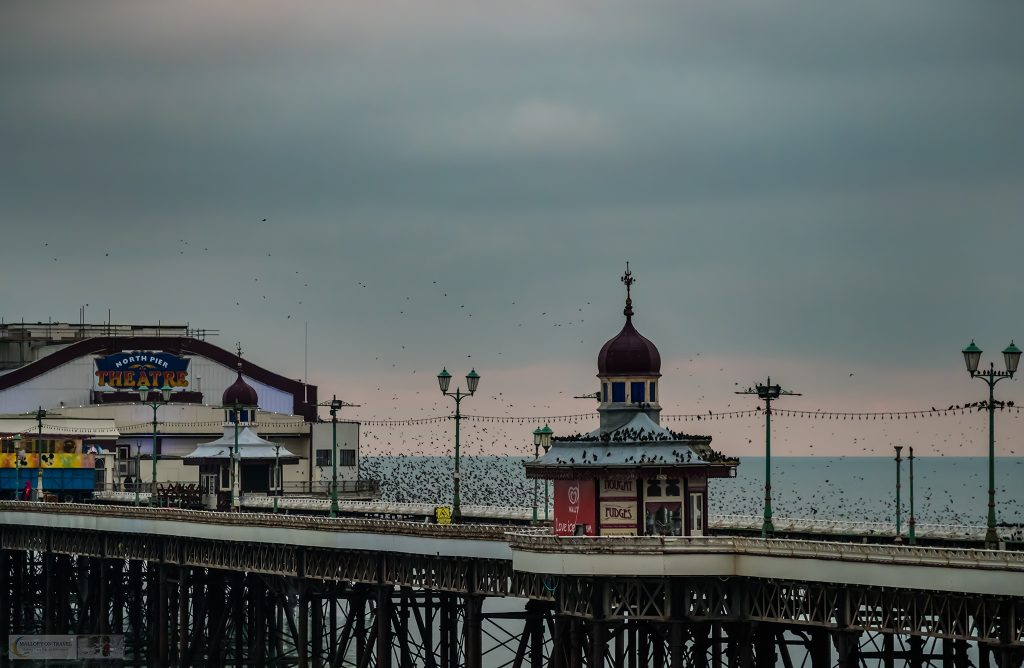 A North Pier murmuration of starlings settles down to roost in Blackpool, the Fylde Coast resort on the Lancashire coast of the Irish Sea on Mallory on Travel adventure travel, photography, travel Iain Mallory_Murmuration 045