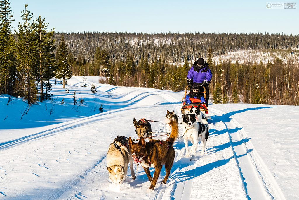 Sled dogs in the winter wonderland of Lappeasuando, dog sledding in Swedish Lapland, the far north of Sweden, within the Arctic Circle on Mallory on Travel adventure travel, photography, travel Iain Mallory_Lapland-1-149