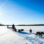 Postcards from Sled Dogs in Swedish Lapland