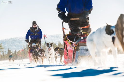 Sled dogs on the run, fast running snow dogs in the Swedish Lapland, inside the Arctic Circle, near Lappeasuando in Sweden on Mallory on Travel adventure travel, photography, travel Iain Mallory_Lapland-1-30
