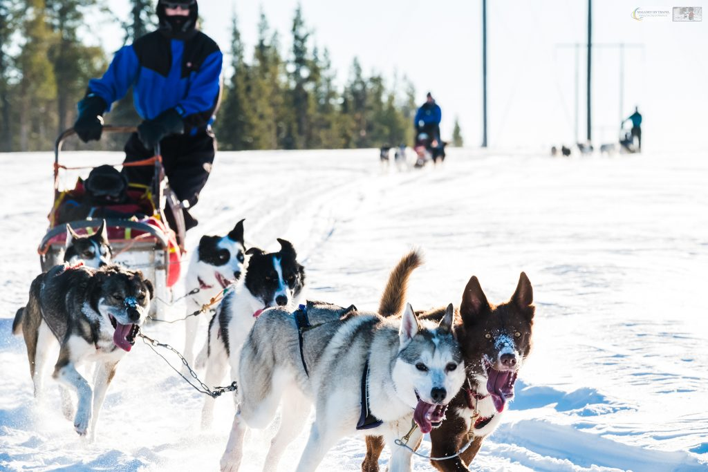 Sled dogs and dog sledding in the Arctic Circle, near Lappeasuando in Swedish Lapland on Mallory on Travel adventure travel, photography, travel Iain Mallory_Lapland-1-70
