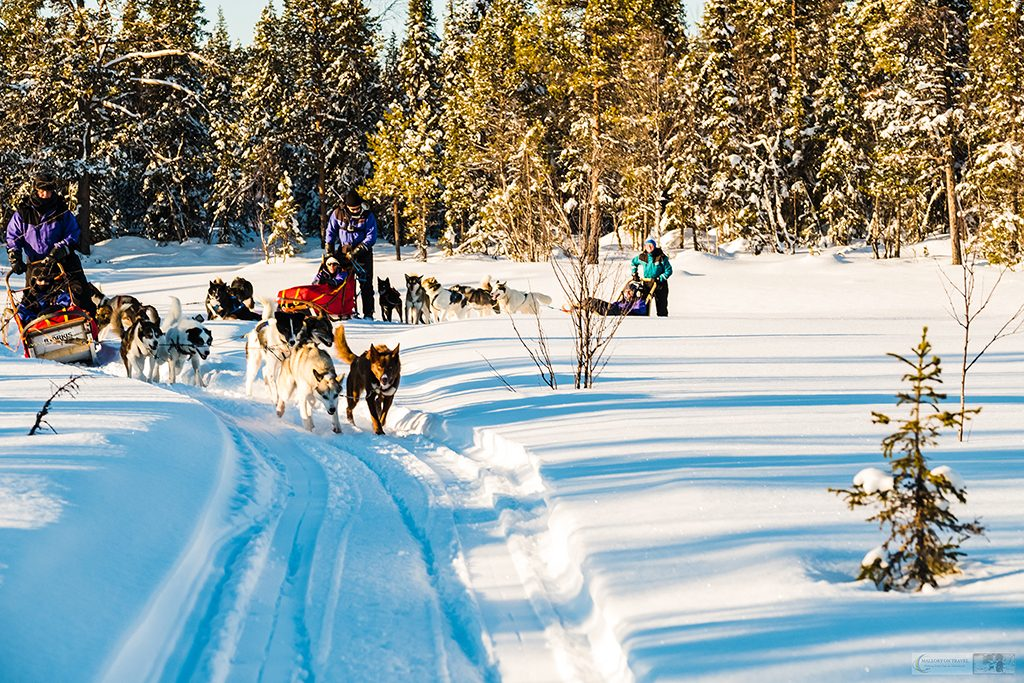 Dog sledding in the winter wonderland of Lappeasuando, dog sledding in Swedish Lapland, the far north of Sweden, within the Arctic Circle on Mallory on Travel adventure travel, photography, travel Iain Mallory_Marple-1-4
