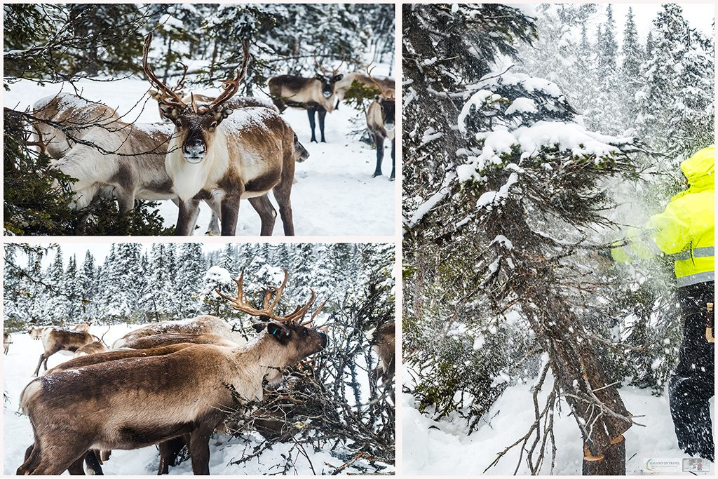 Sami reindeer herdsmen in the cultural landscape of Swedish Lapland, far inside the Arctic Circle on Mallory on Travel adventure travel, photography, travel Iain Mallory_MontageLapland-4