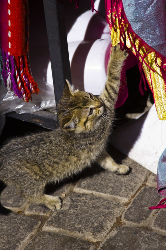 Playful kitten in the medina of Marrakech near Djemaa el Fna Copyright © by Mallory On Travel 2011 adventure photography
