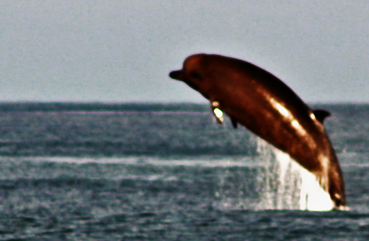 Whale watching in Husavik, Iceland on Mallory on Travel, adventure, photography