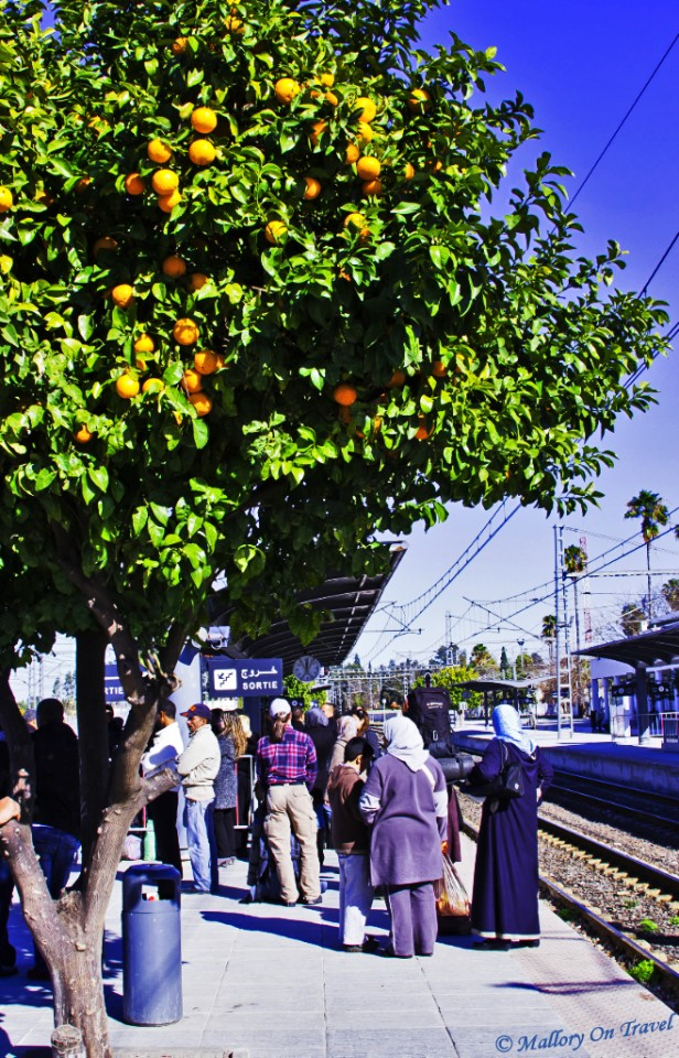 Orange trees and trains in Morocco on Mallory on Travel, adventure, photography