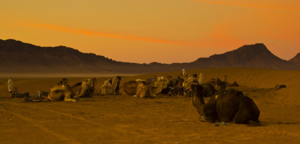 Camels enjoying a Saharan Desert sunrise in Morocco on Mallory on Travel, adventure, adventure travel, photography Iain_Mallory_01060-1