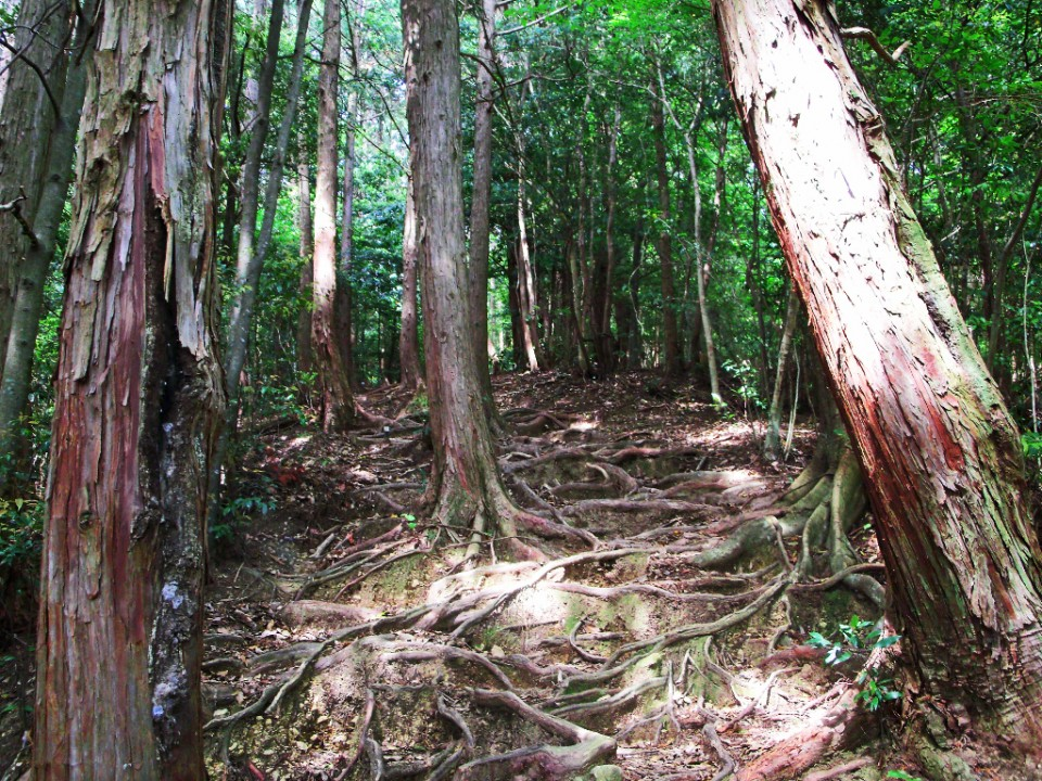Forest trail in Japan on Mallory on Travel adventure photography
